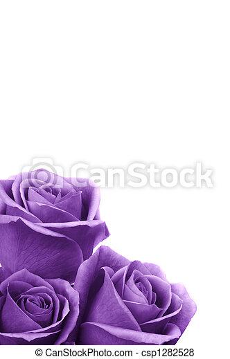 Romantic Roses - csp1282528