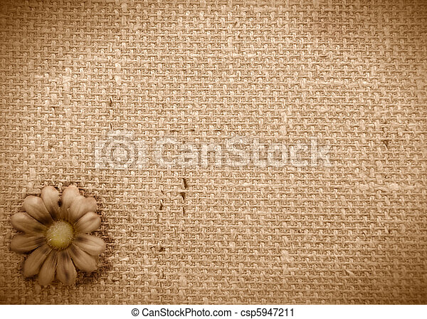 romantic rustic daisy background  - csp5947211