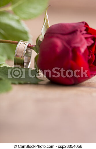Romantic Wedding Band On A Single Red Rose Romantic Wedding Band On