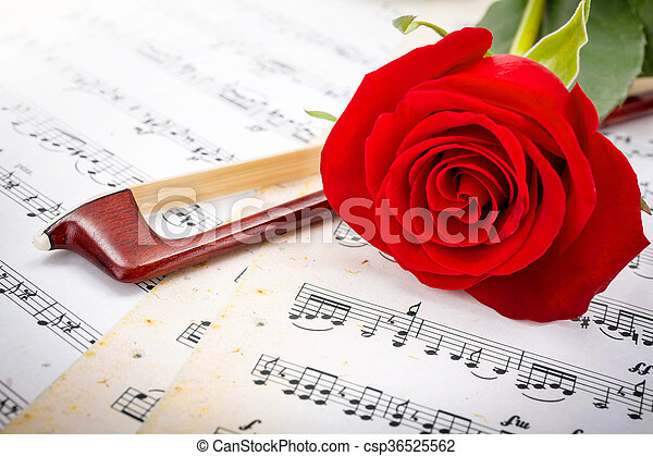 roos, boog, viool, afsluiten, rood, aanzicht - csp36525562