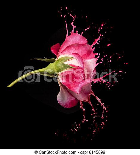 roos, plonsen, rood - csp16145899