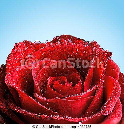 roos, rood, dauw - csp14232735
