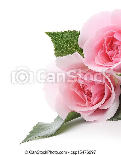 rooskleurige rozen - csp15476297