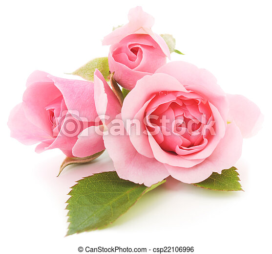rooskleurige rozen - csp22106996