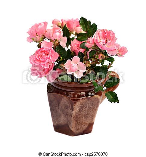 rooskleurige rozen - csp2576070