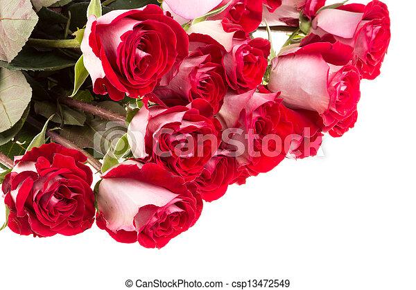 rooskleurige rozen, witte , vrijstaand - csp13472549