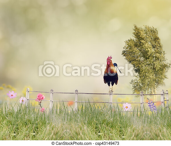 Rooster on a fence - csp43149473