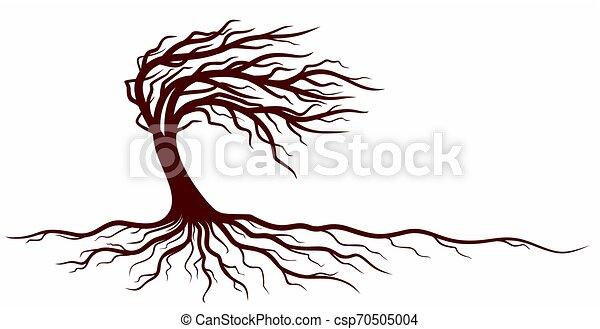 roots., arbre - csp70505004