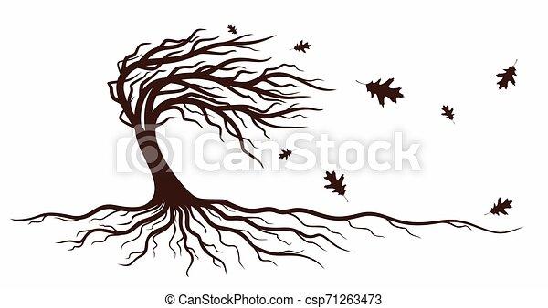 roots., arbre - csp71263473