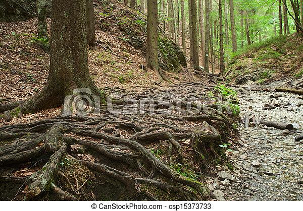 roots of big trees - csp15373733