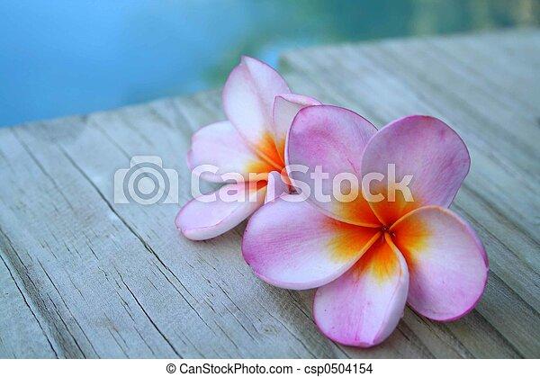 rosa blüten - csp0504154