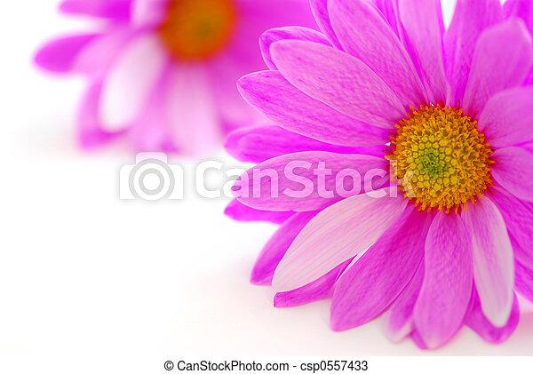 rosa blüten - csp0557433