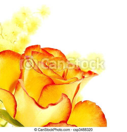 Rosa Bordas Amarela Vermelho Rosa Amarela Bordas Fundo