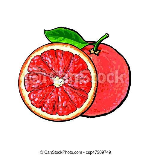 Un pomelo rosado, ilustración de vectores - csp47309749