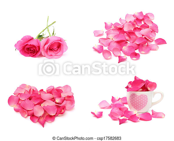 rosa, branca, isolado, fundo, pétala - csp17582683