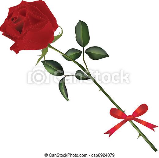 rosa, caule - csp6924079