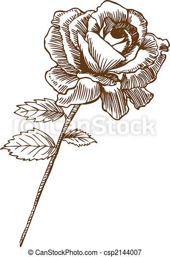 Rose dibujando cinco - csp2144007