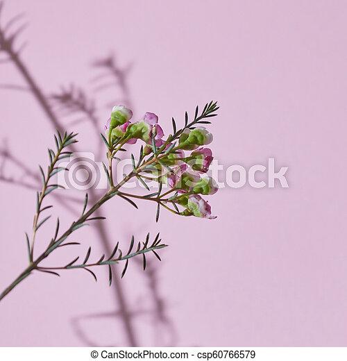 rosa, composición, plano de fondo, primavera, rama, flores - csp60766579