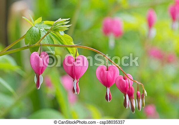 Rosa Corazón Flor En Forma De Corazón Verano Sangría Color