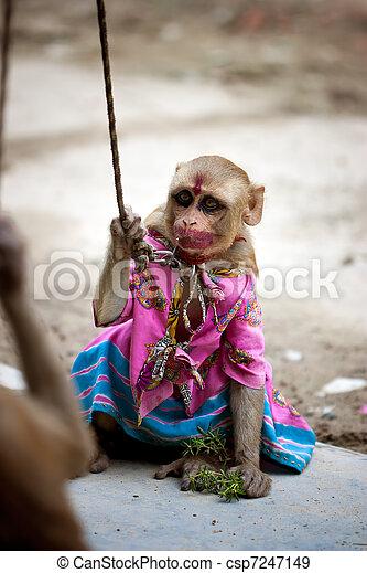 mono indio de color rosa mono indio con traje rosa y