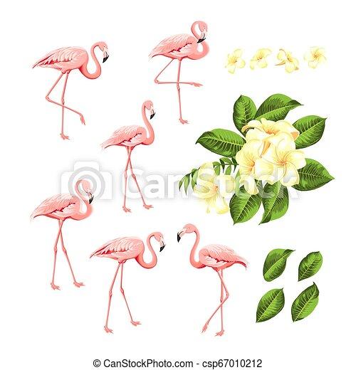rosa, estate, moda, collection., set., scheda, kit., uccelli, tropicale, bundle., fenicotteri, fiore, plumeria, sagoma, invito, stampa, fiori, tuo, elementi, design. - csp67010212