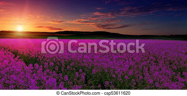Campo púrpura rosa, imaginación, paisaje fantástico, cielo colorido sobre la pradera con flores rosas - csp53611620