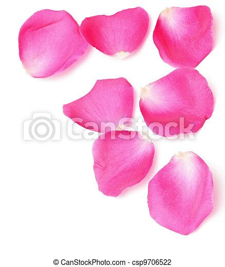 Los pétalos de rosas bordean - csp9706522