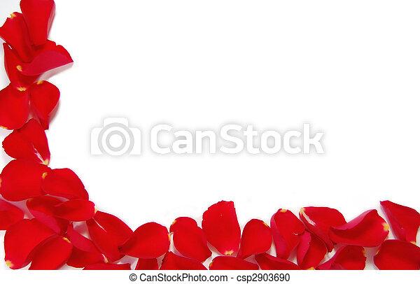 La frontera con pétalos de rosa roja - csp2903690