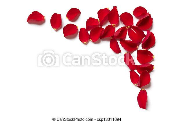 La frontera de pétalos de rosa roja - csp13311894