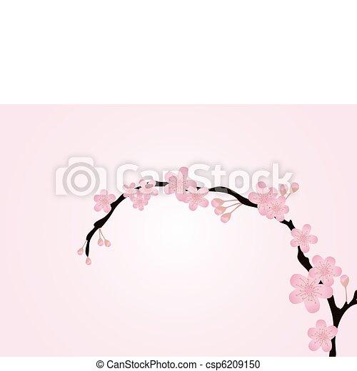 rosa, isolato, ramo - csp6209150