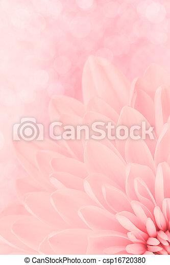 rosa, krysantemum, petals, skott, makro - csp16720380