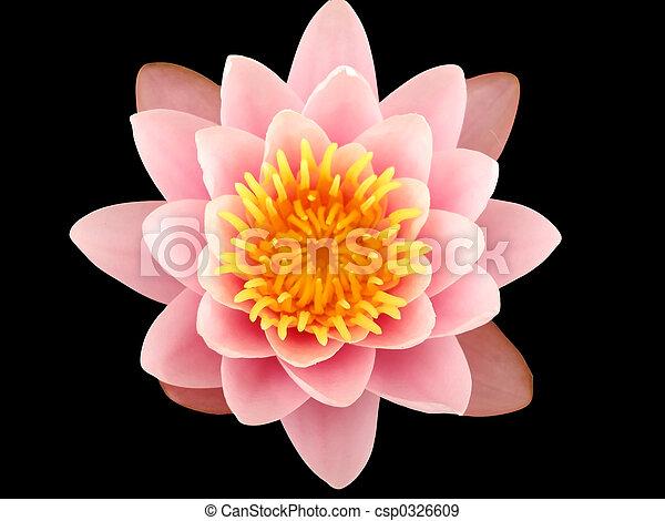 Rosa Lotusblüte - csp0326609