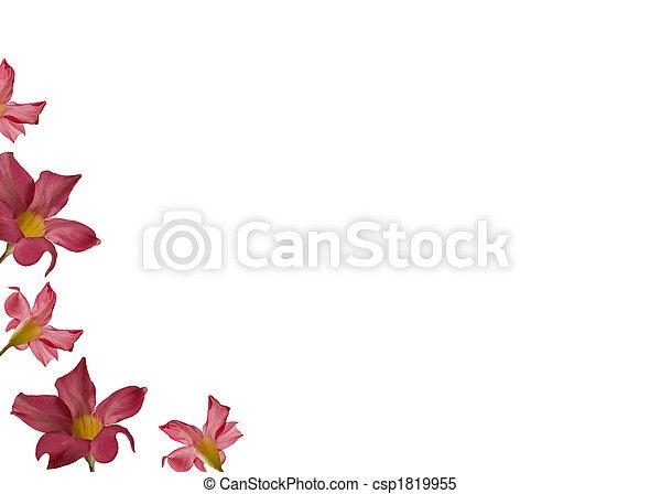 Rosa, marco, flor, día, madres. Flor, madres, saludo, plano de fondo ...