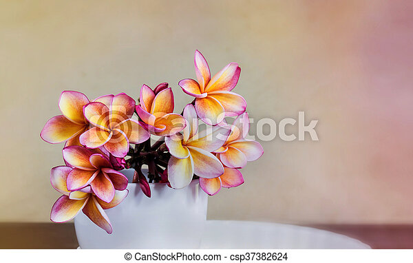 Rosa, raum, große tasse, frei, plumeria, frangipani, orange, weisse ...