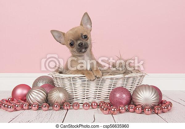 Rosa Weihnachtsdeko.Rosa Reizend Chihuahua Umgeben Weihnachtsdeko Korb Weißes Junger Hund Silber