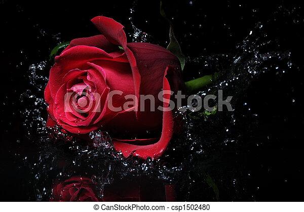 rosa, salpicadura, rojo - csp1502480