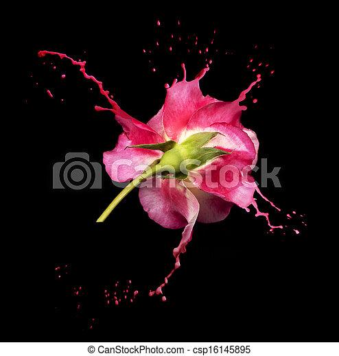 Salpicaduras de rosas rojas - csp16145895