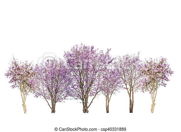 Rosa, satz, freigestellt, bäume, hintergrund, weisse blumen Bilder ...