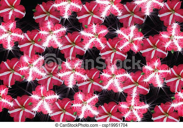 Rosa Sfondo Nero Petunias Fiori Dentellare Zebrato Sfavillante