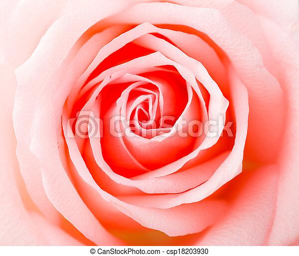 rosa subió - csp18203930