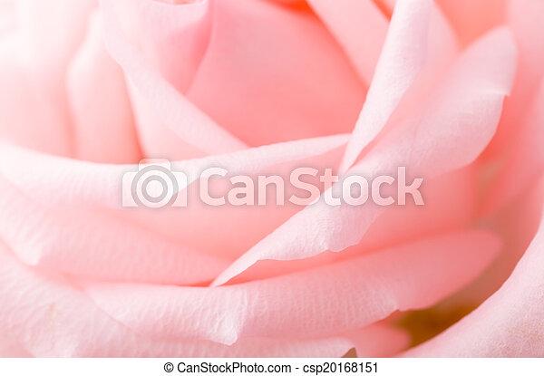 rosa subió, macro - csp20168151