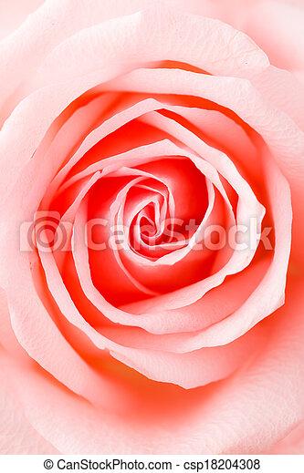 rosa subió, textura - csp18204308