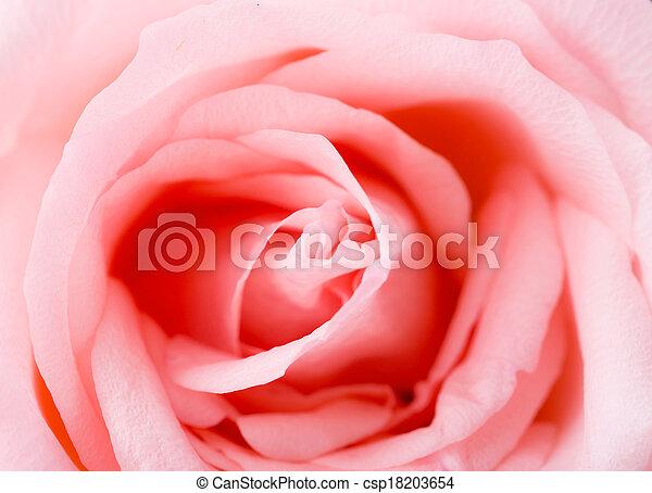 rosa subió, textura - csp18203654