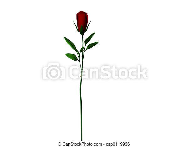 rosa, talo longo - csp0119936