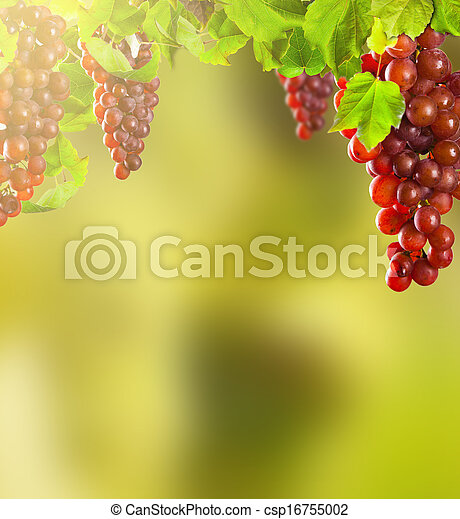 uvas de vino rosa - csp16755002
