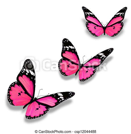 rosa, weißes, vlinders, drei, freigestellt - csp12044488
