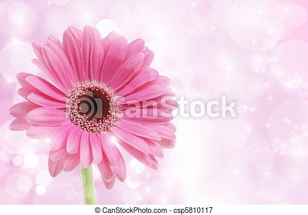 Rosa Gerbera-Blume - csp5810117