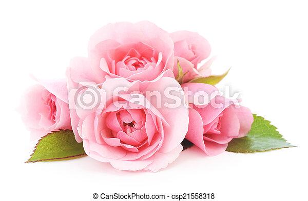 rosafarbene rosen - csp21558318