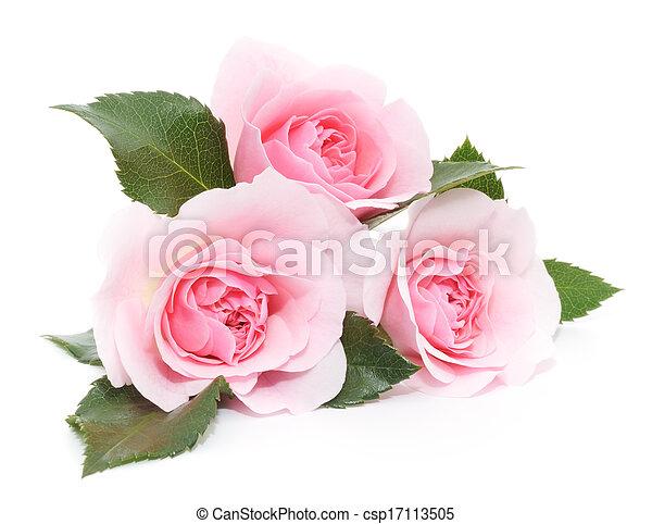 rosafarbene rosen - csp17113505