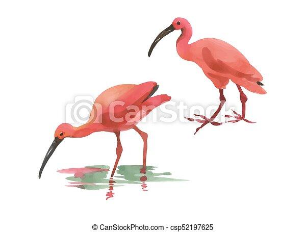 Rosafarbener flamingo, flamingo., gemalt, freigestellt,... Vektor ...